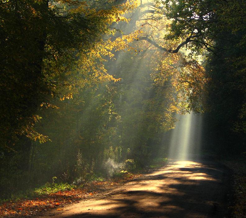 lumière sur le chemin