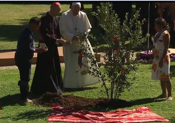 plantation dans les jardins du Vatican