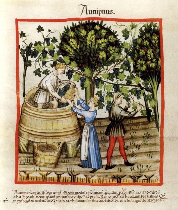 Vendanges de hautains en automne de l'an 1390 Tacuinum Sanitatis (ca. 1390), Wien, Codex Vindobonensis Series nova 2644, fol. 54 verso